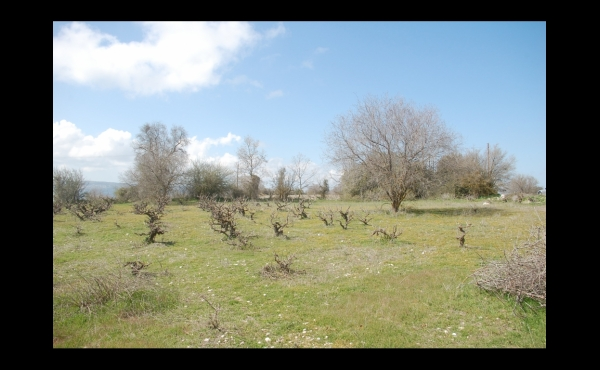 PP112-Lasa-Kiprianou Land (15)