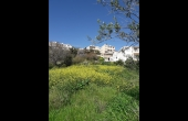 PP274, Land for sale in Pegeia